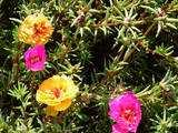 4 flori