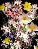 5 flori