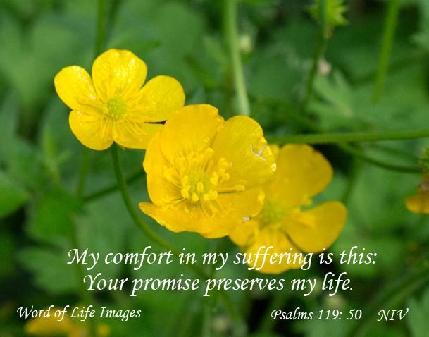 comfort 1