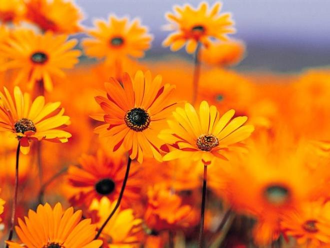 1flower
